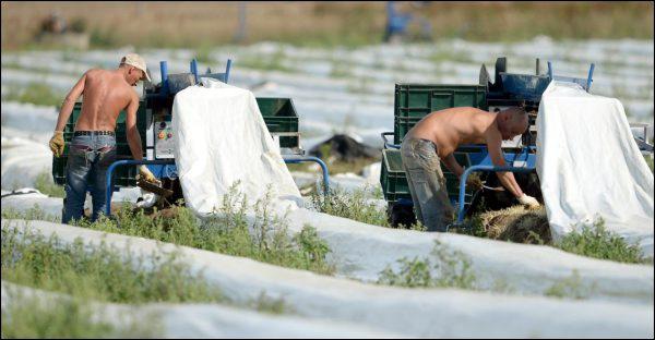 Allemagne : Vers l'introduction d'un salaire minimum