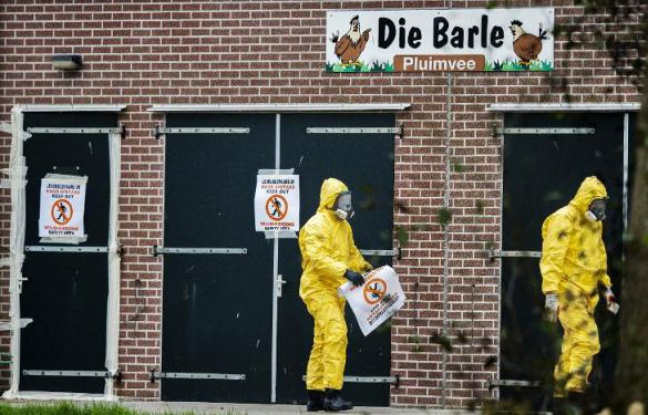 Pays-Bas : Prévention contre la grippe aviaire