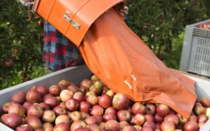 Italie : des pommes bourrées de pesticides sur les marchés