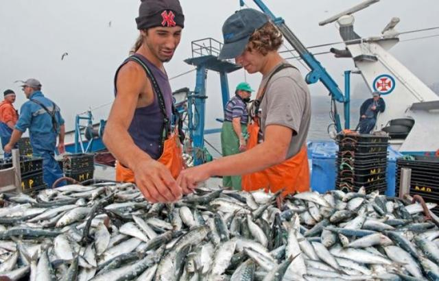 Portugal: la pêche à la sardine menacée de disparaître