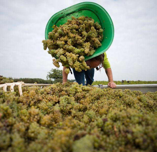 L'Italie de nouveau à la tête des producteurs de vin