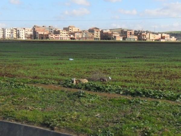 Agriculture : l'Algérie perd 300.000 hectares arables chaque année