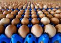 Des millions d'œufs contaminés retirés de la vente en Allemagne