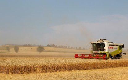 Allemagne :  La sécheresse affecte sensiblement l'agriculture