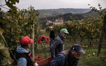 En manque de travailleurs saisonniers agricoles, l'Italie va régulariser 200.000 sans-papiers