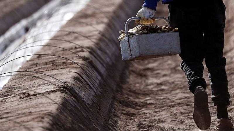 L'Allemagne va accueillir des travailleurs saisonniers malgré la crise sanitaire