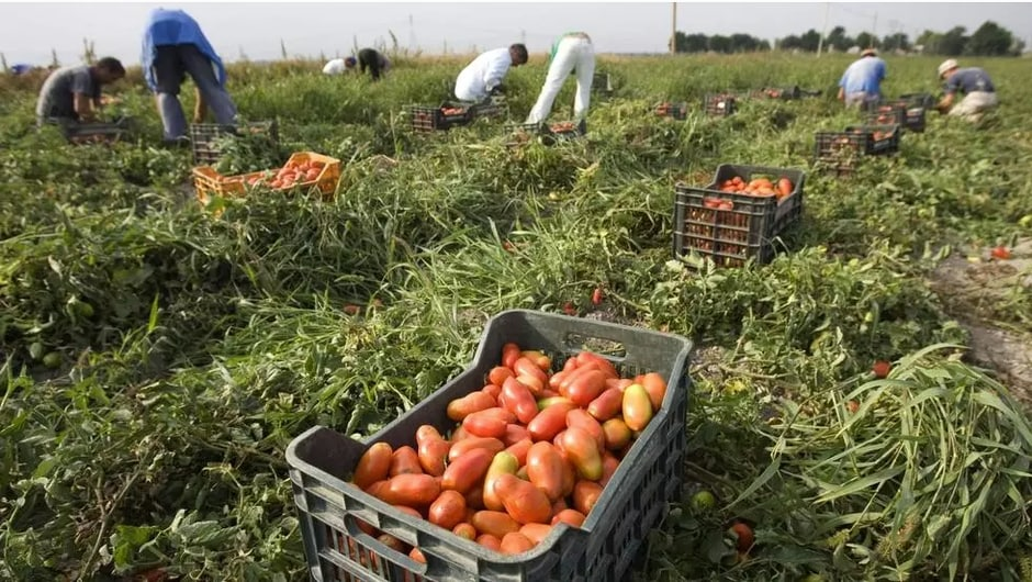 Le gouvernement italien lance une régularisation massive des travailleurs clandestins
