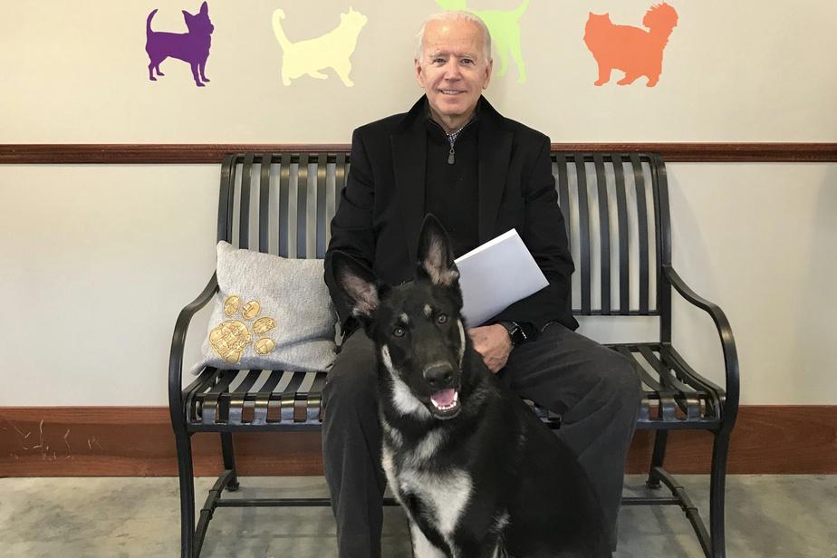 Etats-Unis : Le président élu, Joe Biden, se fracture au pied droit en s'amusant avec son chien