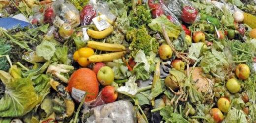 Près de 20% de la nourriture disponible gaspillée chaque année dans le monde